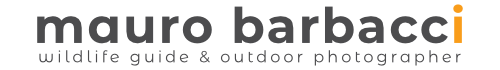 Mauro Barbacci Wildlife & Travel Photographer Logo